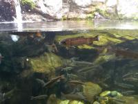 acquarium1