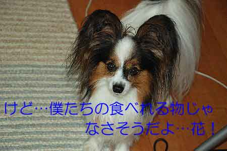 DSC_0017_20080904124831.jpg