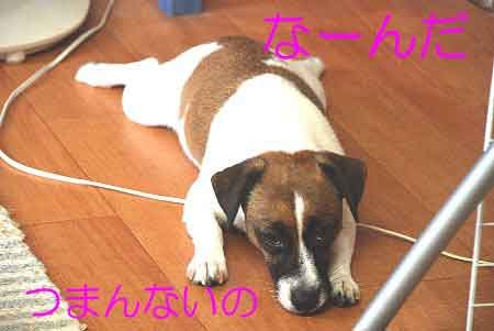 DSC_0025_20080904124845.jpg
