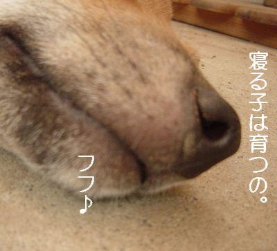 DSC07572.jpg