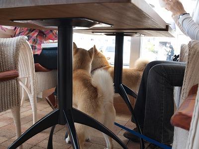 テーブルの下は?