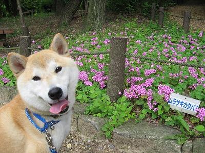 ピンクの小花と♪