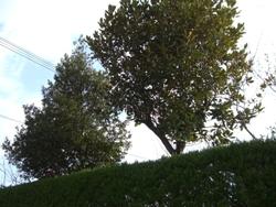1月6日植木