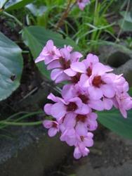 3月15日お花