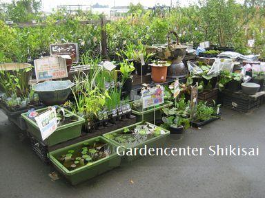 水生植物コーナー