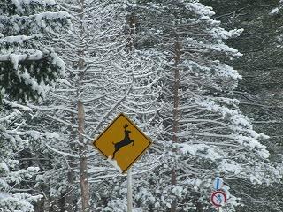 鹿が!飛び出し注意!!