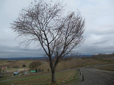 四季彩の丘から。