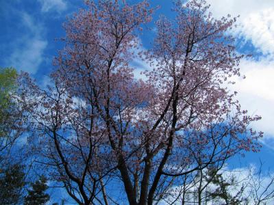 温泉ホテルさん桜②