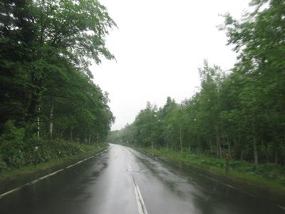 雨の白樺街道