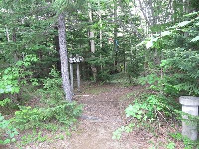 左へ行くと原生林コース