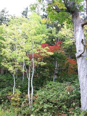 野鳥の森方面
