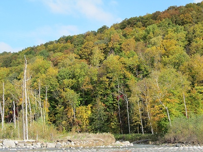 集水口周辺の紅葉