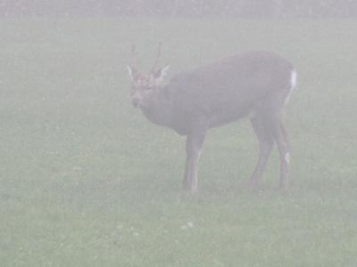 鹿ですが何か?