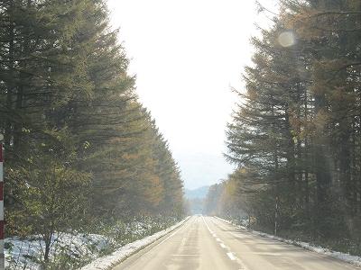 枝の雪も消え。。。