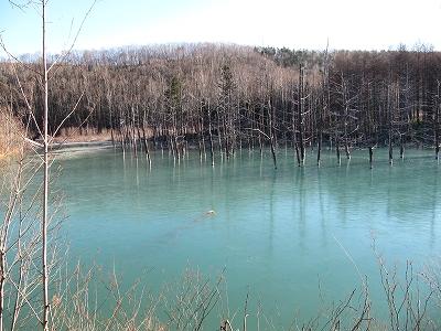 青い池全体。
