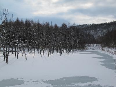 凍りだした青い池・・・