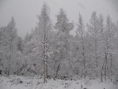 重い雪。。。