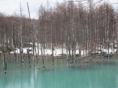 s-今日の池