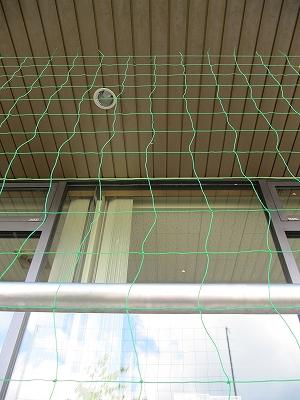s-緑のネット