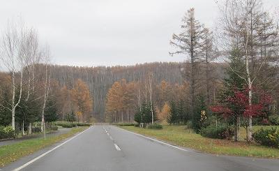 s-ビルケの森