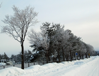 s-朝の(犬と)散歩道、、、サブッ