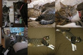 2008-7-11.jpg