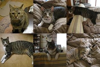2008-7-13.jpg