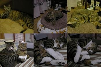 2008-7-4.jpg