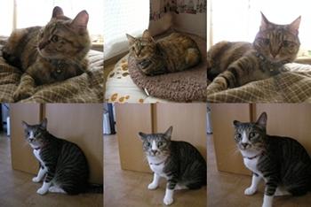 2008-7-8.jpg