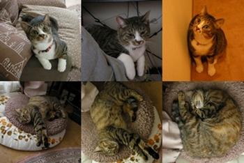 2008-8-3.jpg