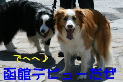IMG_0109_sh01.jpg