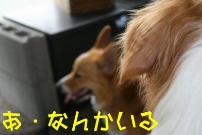 IMG_1516_sh01.jpg