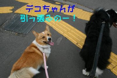 IMG_1528_sh01.jpg