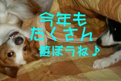 IMG_7406_sh01.jpg