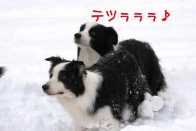 IMG_8123_sh01.jpg