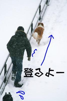 IMG_8280_sh01.jpg