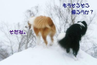 IMG_8371_sh01.jpg