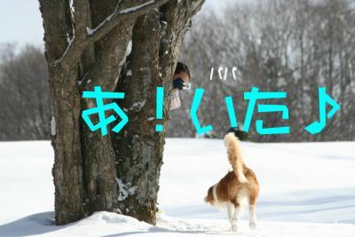 IMG_8496_sh01.jpg