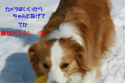 IMG_8646_sh01.jpg