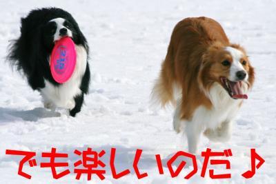 IMG_8745_sh01.jpg