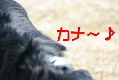 IMG_9265_sh01.jpg