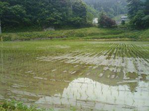 2011-05-21 07.57.19_blog