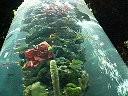 rainforet.jpg