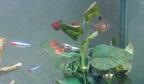 ハウスクリーニング屋さんのお魚1