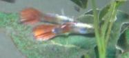 ハウスクリーニング屋さんのお魚2