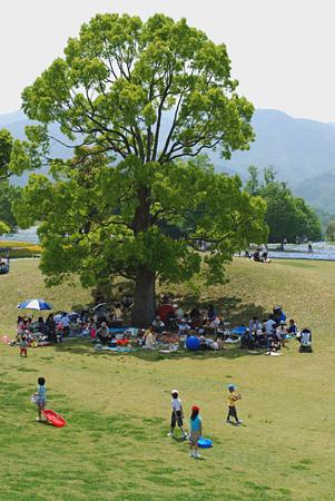 少ない木陰に群れる大人たち