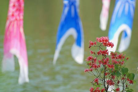 花と鯉のぼりで無理やり季節感を煽る