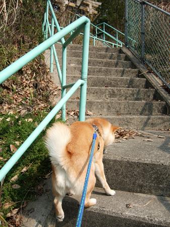 階段になると、何故駆け上がりたがるのか・・・