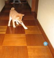 新しいボール投入!