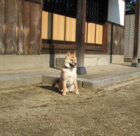 ざ、日本犬